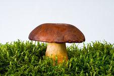 Free Mushroom On Moss Royalty Free Stock Photo - 16468225
