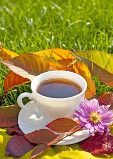 Cup Of Tea In The Garden Royalty Free Stock Photo