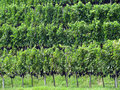 Free Vineyard Stock Photos - 16470943