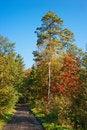 Free Autumn Forest Path Stock Photos - 16471123