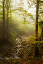 Free Fabulous Fresh Stream In The Forest Stock Photos - 16471193