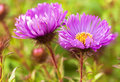 Free Daisy Flower Stock Photos - 16471323