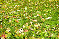 Free Leaves Lying On The Ground During Autumn Royalty Free Stock Photo - 16472965
