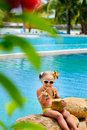 Free Baby Girl Witn Coconut Cocktail Stock Photo - 16473610