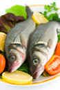 Free Fresh Sea Bass Stock Image - 16474721