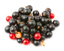Free Currant Royalty Free Stock Photography - 16470077