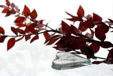 Free Heart Shape Ice And Red Leafs Stock Images - 16470964