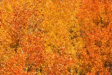 Free Autumn Background Stock Images - 16471374