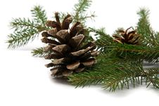 Free Branch Of Fir-tree And Cone Royalty Free Stock Photography - 16472587