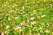 Leaves Lying On The Ground During Autumn Royalty Free Stock Photo