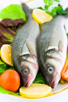 Free Fresh Sea Bass Stock Photography - 16474192