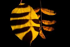 Free Leaves Stock Photos - 16474383