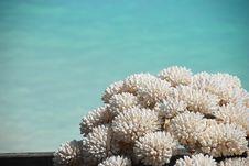 Free Coral Stock Photos - 16474403