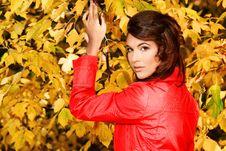 Free Foliage Autumn Royalty Free Stock Photo - 16474525