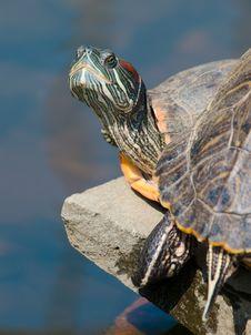 Free Turtle Portrait Royalty Free Stock Photos - 16474628