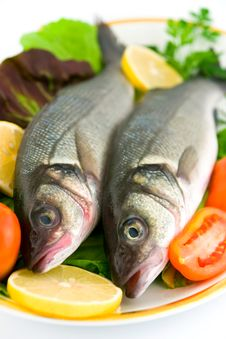Free Fresh Sea Bass Stock Image - 16474721