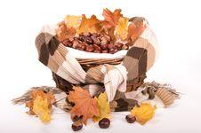 Free Autumn In Studio Royalty Free Stock Image - 16475006