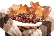 Free Autumn In Studio Royalty Free Stock Photo - 16475035