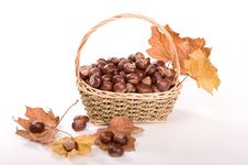 Free Autumn In Studio Stock Photography - 16475142