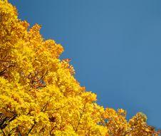 Free Autumn Lyrics Stock Photo - 16475150