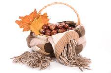 Free Autumn In Studio Stock Photography - 16475172
