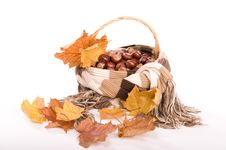 Free Autumn In Studio Royalty Free Stock Photography - 16475197