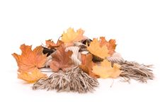 Free Autumn In Studio Royalty Free Stock Photography - 16475297