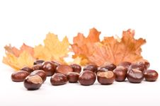 Free Autumn In Studio Royalty Free Stock Images - 16475339