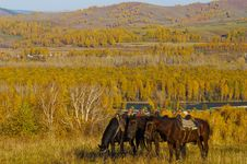 Free Three Horses On The Autumn Hill Stock Image - 16475451