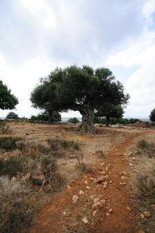 Free Crete Royalty Free Stock Photo - 16477135