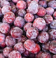 Free Pile Of Purple Plums . Royalty Free Stock Photos - 16477538