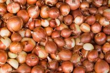 Free Onion Background Royalty Free Stock Images - 16477559