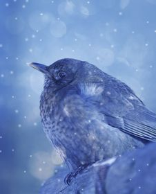 Free Little Bird In Winter Time Stock Photo - 16477950