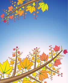 Free Autumn Branches Stock Image - 16478091