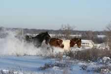 Free Winter Horses Royalty Free Stock Image - 16478406