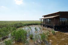 Free Wetland Royalty Free Stock Image - 16479096