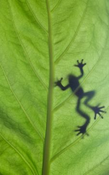Free A Frog Stay On Leaf Stock Images - 16479164