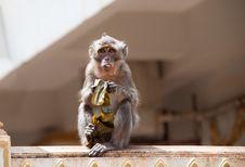 Free Monkey Face Stock Images - 16479274