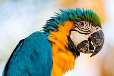Free Colorful Parrot 1 Stock Image - 16479491