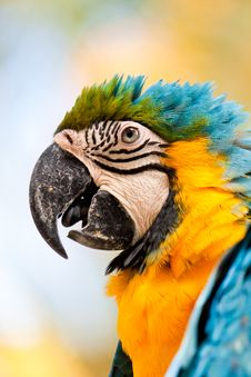 Free Colorful Parrot 2 Royalty Free Stock Photo - 16479645