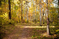 Free Autumn Wood Stock Photo - 16480450