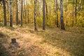 Free Autumn Wood Stock Photo - 16480460