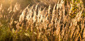 Free Wild Plant Stock Image - 16482711