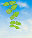 Free Plant On Sky Background Stock Images - 16489084