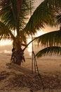 Free Swing At Sunrise On Coast Of Belize Royalty Free Stock Images - 16489239