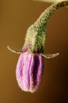 Free Macro Vegetable Flower Stock Images - 16480214