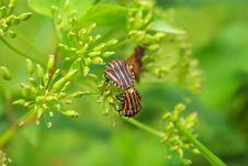Free Beetles Royalty Free Stock Photo - 16480855