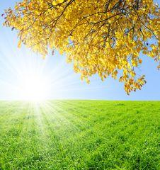 Free Autumn Tree Stock Image - 16481301