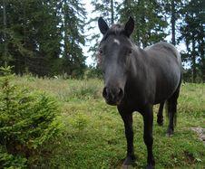 Free Black Horse Stock Photo - 16481560