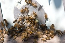 Free Turn In A Beehive Royalty Free Stock Images - 16481599